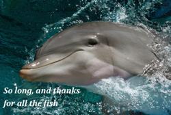 dolphin_sm