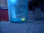 firefly jar sm