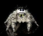 spider sm