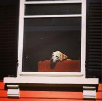 bored dog sm