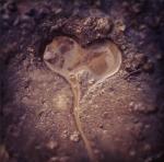 mud heart