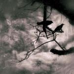 november crows