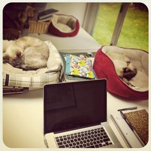 2 cat desk