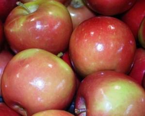 Apples_01