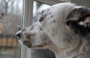 Matt Cheauvront's dog, Cowboy