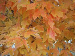 LisaJ_fall leaves