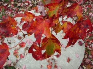 LisaJ_fall_red_leaves