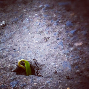 sidewalk sprout