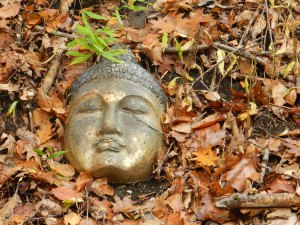 Buddha in the Woods photo: Deborah Lee Luskin