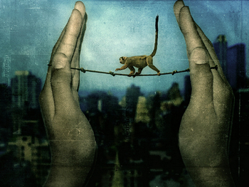 monkey tightrope