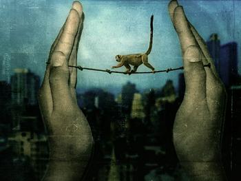 monkey tightrope