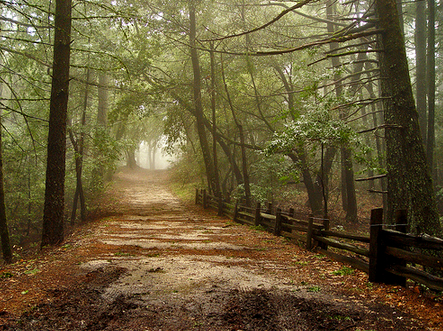 wooded road