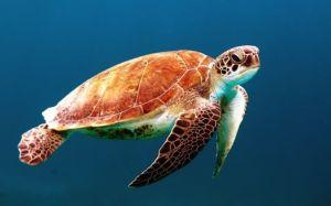 turtle photo (1)