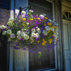 The house may need new shingles and paint, but at least we have some cheerful flowers to brighten the door.
