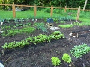 I think about my words as I weed my garden. Last weeded 6/11/16; photo taken 6/14/16 at 6 am.