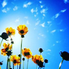 IG sunny flowers