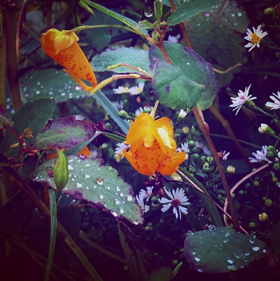 Autumn Vignette: And in the faerie bower they slept amidst petals of every hue and dewdrops that shone like jewels.