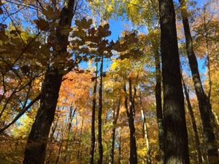fall-trees-sky