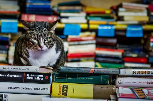 cranky book cat