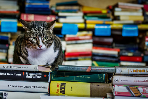 cranky book cat